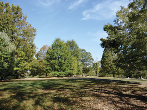 view of park with trees and blue sky