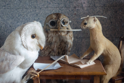 2_taxidermy